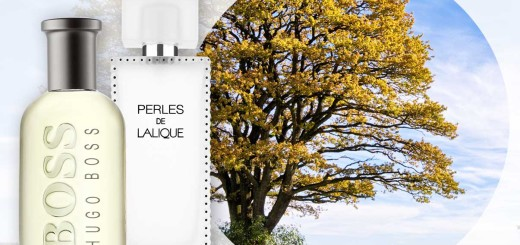 oak-perfumes
