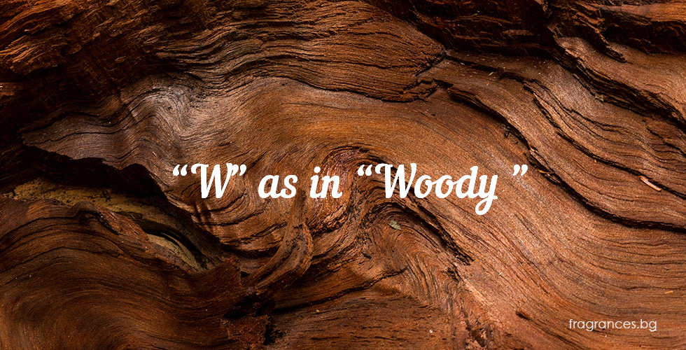 woody perfumes
