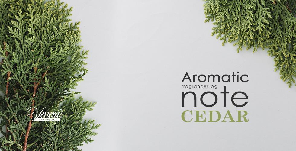 Aromatic-cedar-fragrances-blog-post-image-00-EN