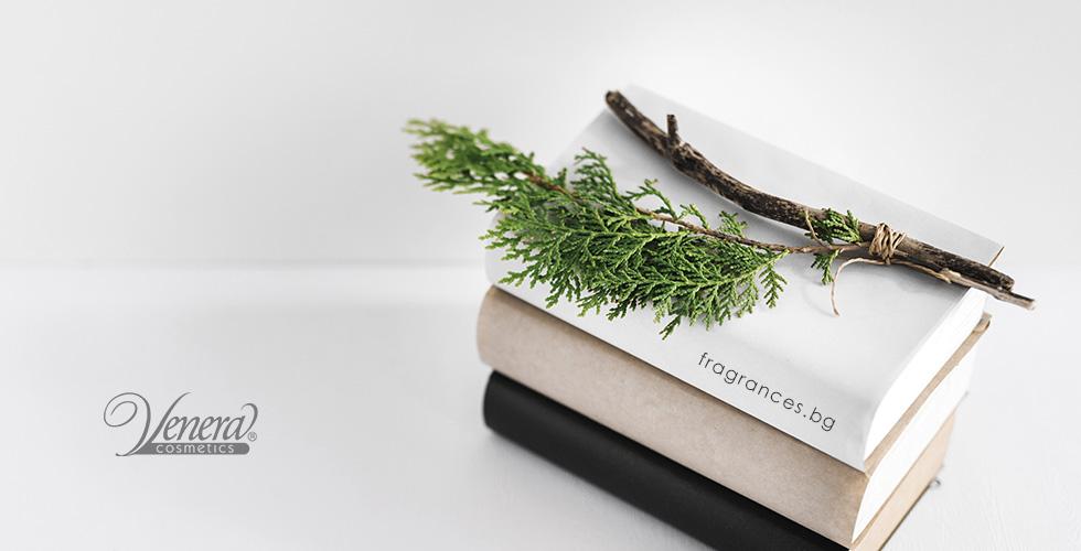 Aromatic-cedar-fragrances-blog-post-image-01