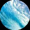 Ароматна морска