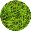 Ароматна тревиста